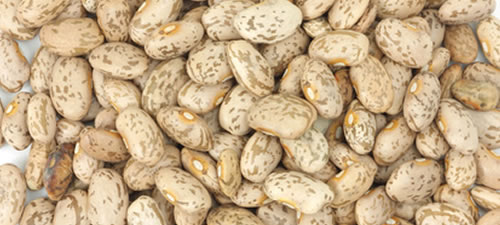 beans_pinto