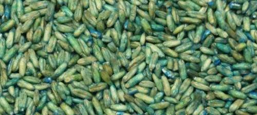 oats-groats-blue
