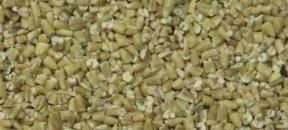 oats-groats-plain-steel-cuts