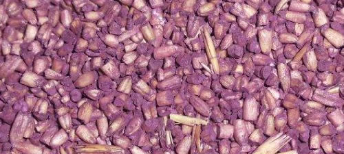 oats-groats-purple-steel-cuts
