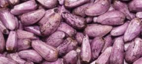 safflower-purple